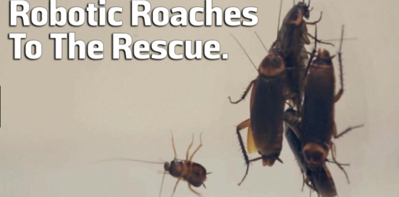 Harvard's New Cockroach Inspired Robot