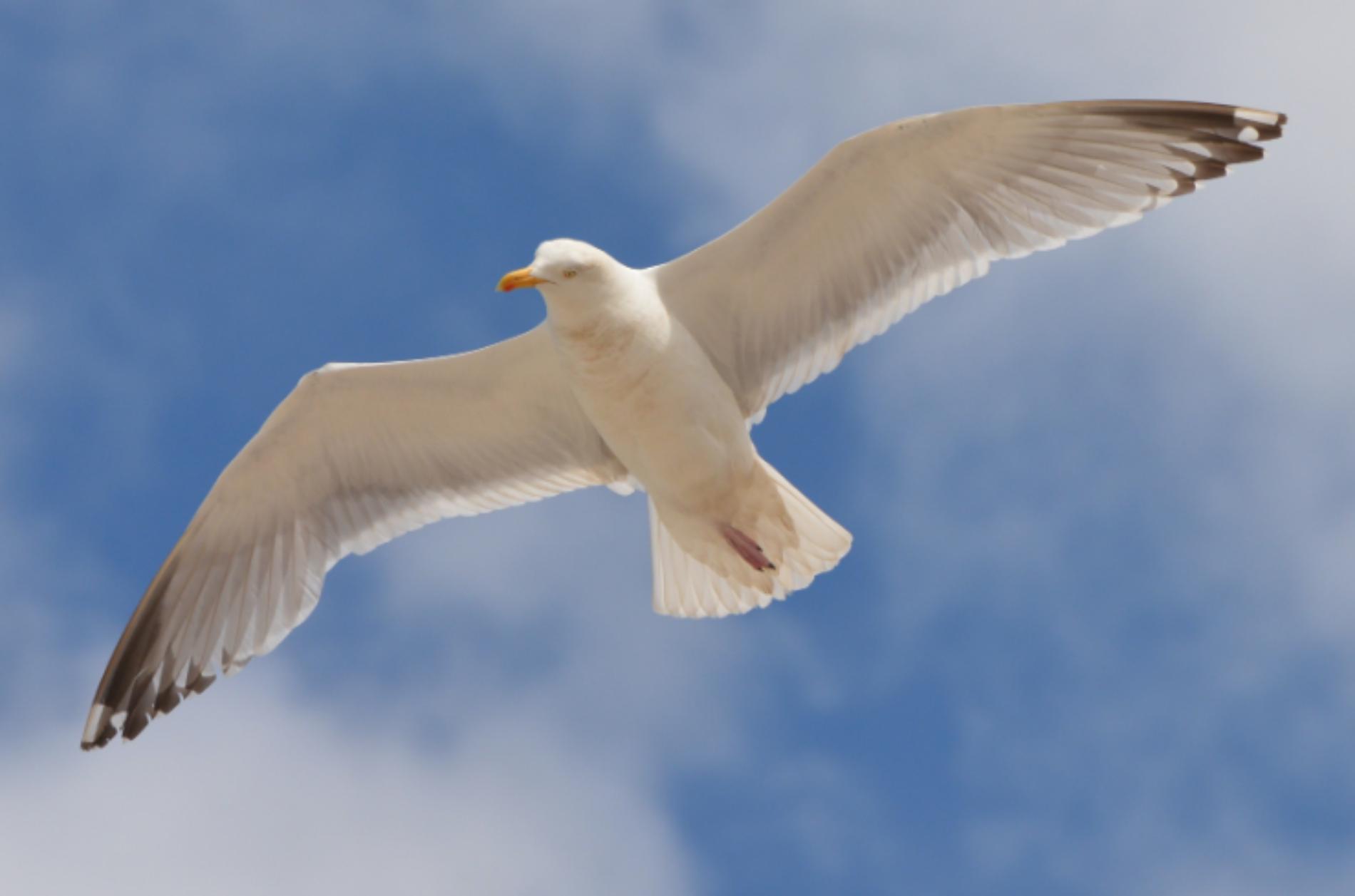 The Floating Bird-Like Robot